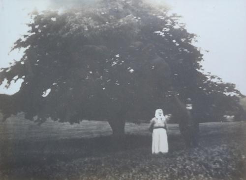 Andreas och Elna för snart 100 år sedan. Trädet planterades våren 1876.