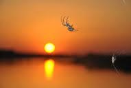 spindel